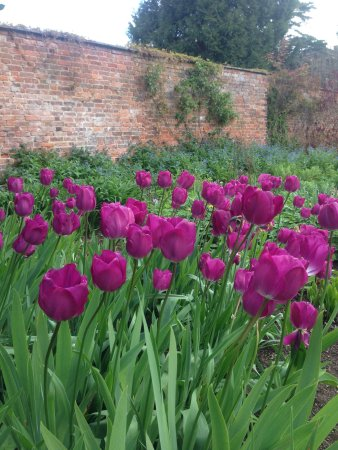 Tenbury Wells, UK: Lovely Burford House Gardens