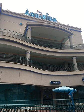 Downtown Aquarium: photo1.jpg