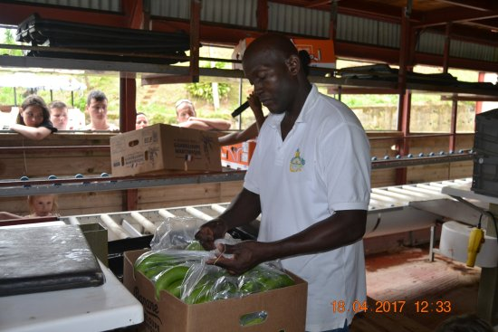 Le Lamentin, Martinica: on emballe avant l'exportation