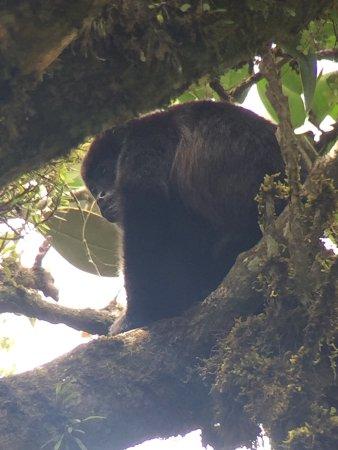 Reserva Bosque Nuboso Santa Elena: photo4.jpg