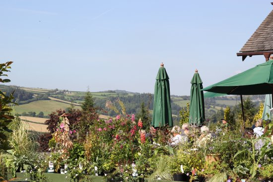 Lostwithiel, UK: Delicious food, beautiful plants, tempting gifts and a gorgeous view of Cornwall