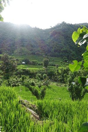Kerobokan, Indonesia: Promenade dans les célèbres rizières