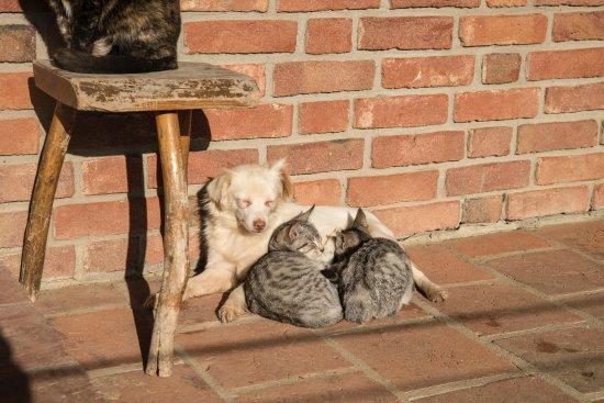 Cellarengo, İtalya: Cani e gatti