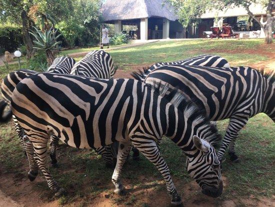 Marloth Park, South Africa: Ce lieu est vraiment magique !! Chaque séjour réserve son lot de plaisir !
