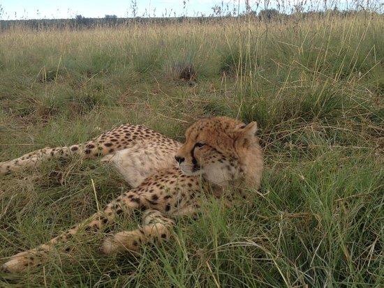 N/a'an ku se Lodge and Wildlife Sanctuary: photo0.jpg
