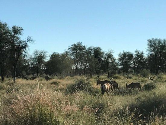 N/a'an ku se Lodge and Wildlife Sanctuary: photo5.jpg