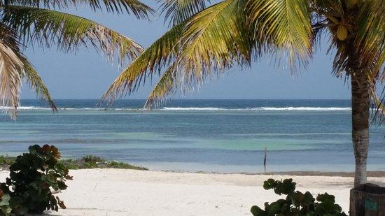 Mayan Beach Garden: 20170406_141313_large.jpg