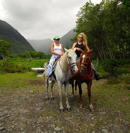 Honokaa, Hawaï : We took a horse back riding tour that was nice in relaxed.My cousin loved it.