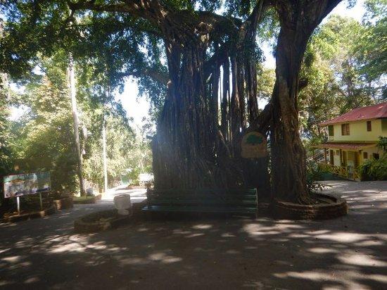 Jaital: tree in falls area