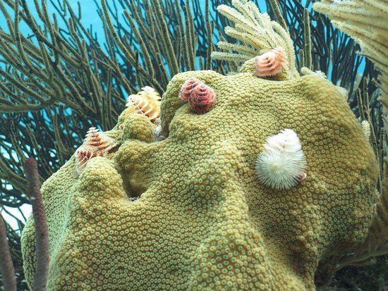 Kralendijk, Bonaire: Coral