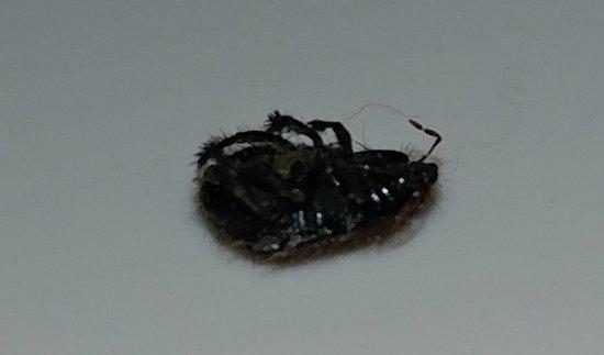Sonesta ES Suites Tucson: Possible bed bug. I am not an expert.