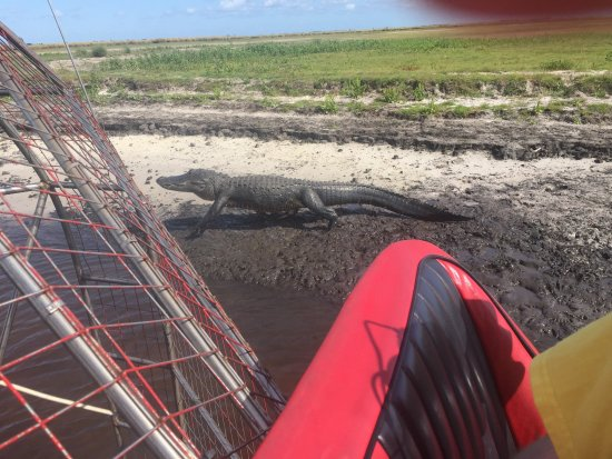 Foto de A-Awesome Airboat Rides
