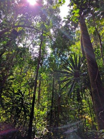 Maroantsetra, Madagascar: The primary rainforest
