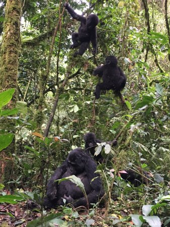 Bwindi Impenetrable National Park: photo0.jpg