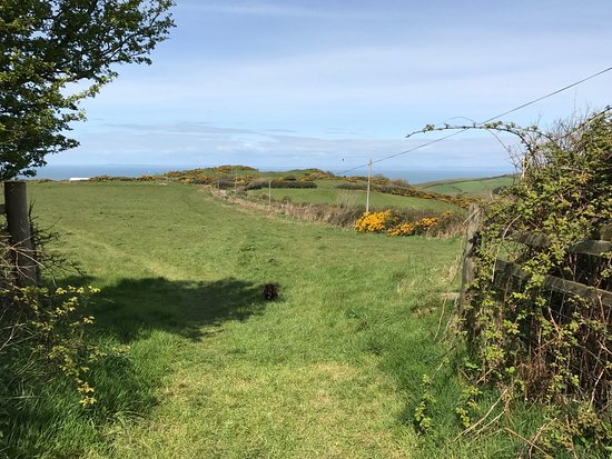 Mortehoe, UK: Great big field to walk your dog on the campsite with beautiful views.