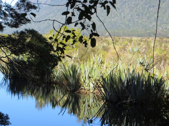 フィヨルドランド国立公園 Picture