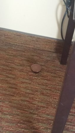 Schererville, IN: The reese's that lied on the floor for our entire stay