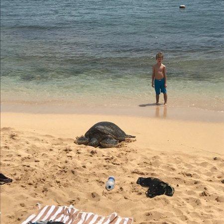 Poipu Beach Park: photo2.jpg