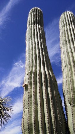 Eastern district of the Saguaro National Park Picture of Rincon
