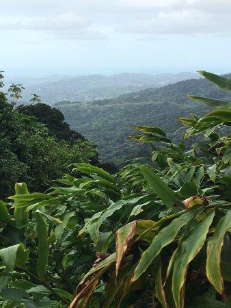 The El Yunque Rain Forest: photo3.jpg