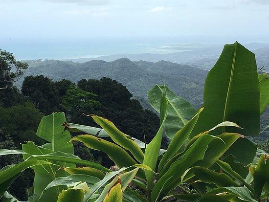 The El Yunque Rain Forest: photo4.jpg