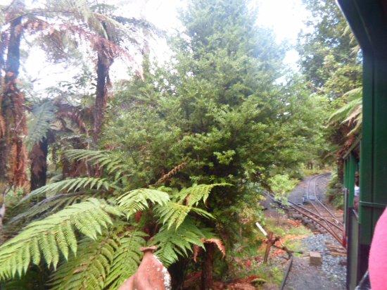 Coromandel, Νέα Ζηλανδία: Paseo en tren