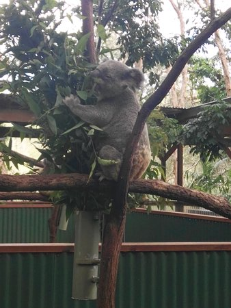 Currumbin, Αυστραλία: IMG_20170413_114010_large.jpg