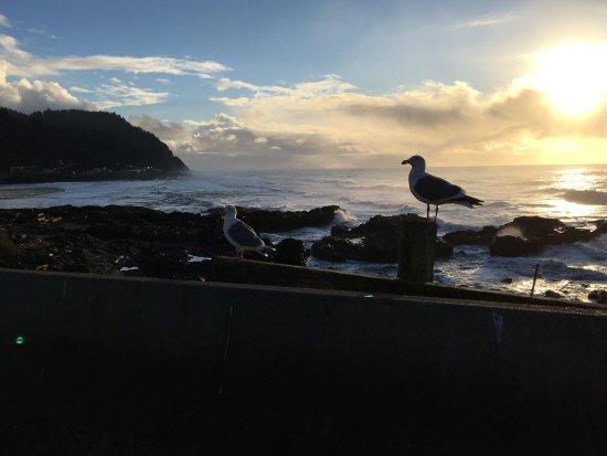 Yachats coastline: photo6.jpg