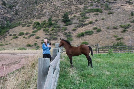 Loveland, CO: Foal in the pasture
