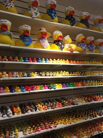 Chatham, MA: Ducks for sale