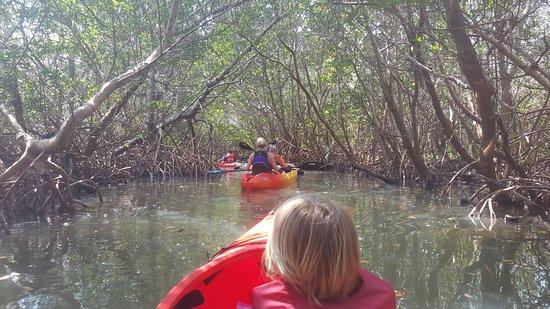 Adventure Sea Kayak : Kayaking through the mangrove forest