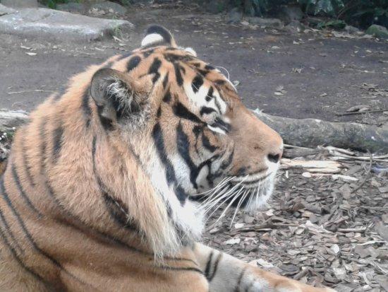 Auckland Zoo: 20170420_161833_large.jpg