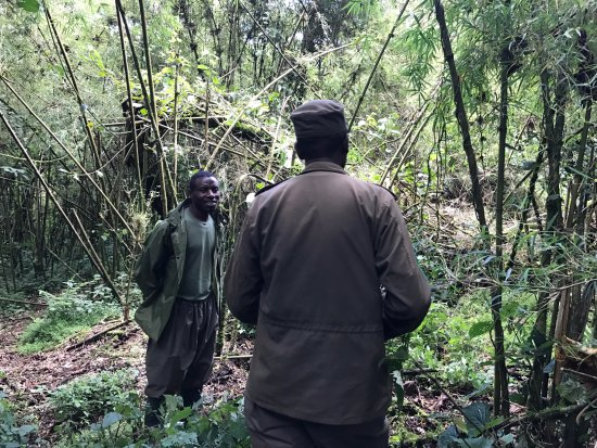 2cd646a192db Virunga National Park  park ranger and a tracker who protect the gorillas