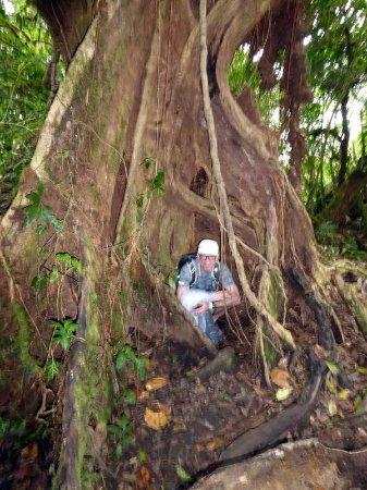 Bilde fra Monteverde Cloud Forest Reserve