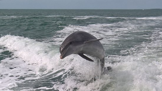 Sea Screamer: One of the many dophins we saw!