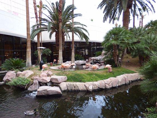 Casino at the Flamingo Las Vegas: Flamencos