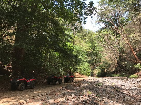 iQuad: A little stop in the Jungle