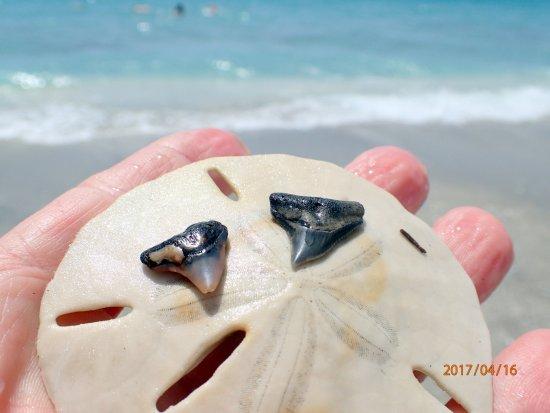 Foto de Turtle Bay Condos