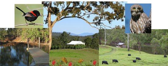 Atherton, Australia: Barking Owl Retreat
