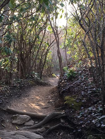 Brevard, NC: Graveyard Fields Loop Trail