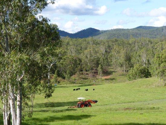 Atherton, Australia: Dam paddock at Barking Owl Retreat