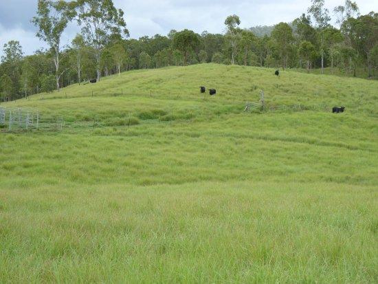 Atherton, Australia: Lush paddocks after the wet season at Barking Owl Retreat