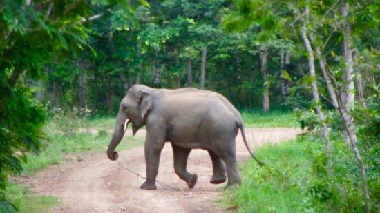 Provincia de Prachuap Khiri Khan, Tailandia: Roadside Jumbo