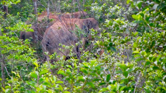 Provincia de Prachuap Khiri Khan, Tailandia: Hiding in the trees