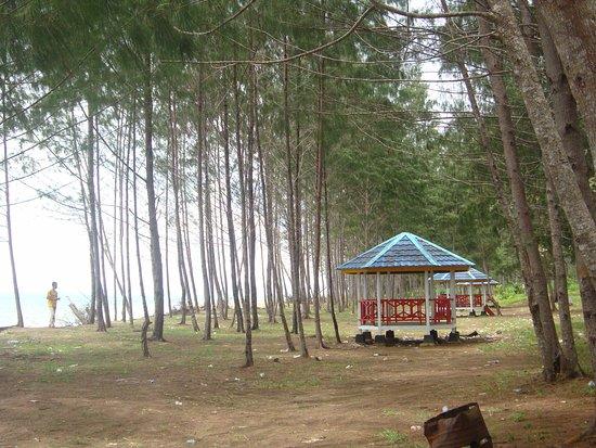 Seram Island, Indonesia: Nampak dari Jauh Pantai Seram Timur dengan hamparan pohon kasawari pantai yang cukup banyak