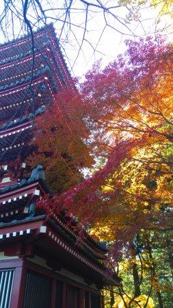 Matsudo, Japan: コントラスト
