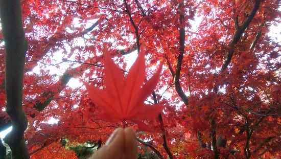 Hondo-ji Temple: 真っ赤っか