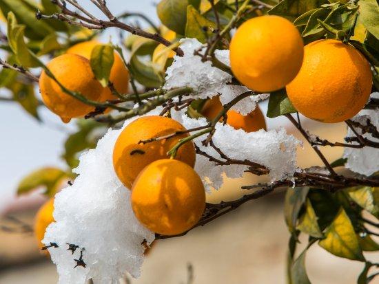 Casa Rosa : Snow covered Alcalali in February