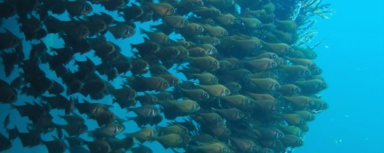 South Perth, Australien: Discover the underwaterworld!
