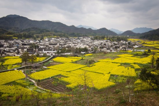 She County, Cina: Panoramic view of village surrounded for yellow flowers